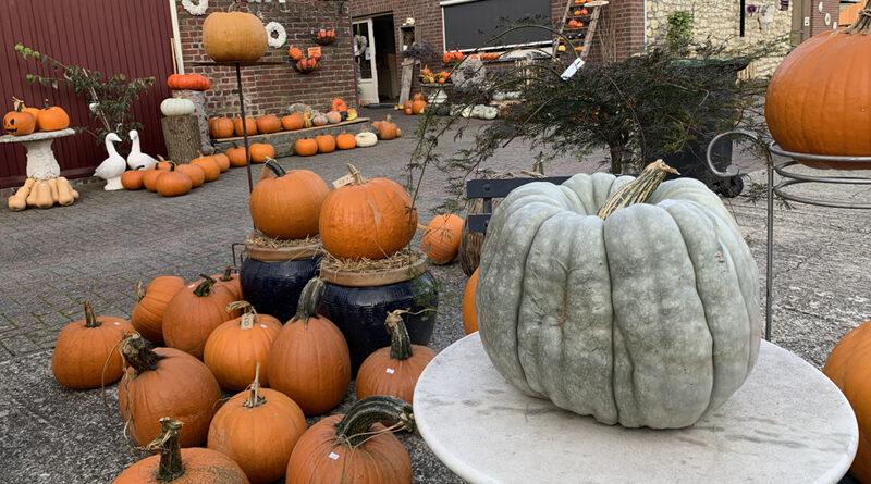 Pompoenen Boerderijwinkel Mertens in Zuid-Limburg